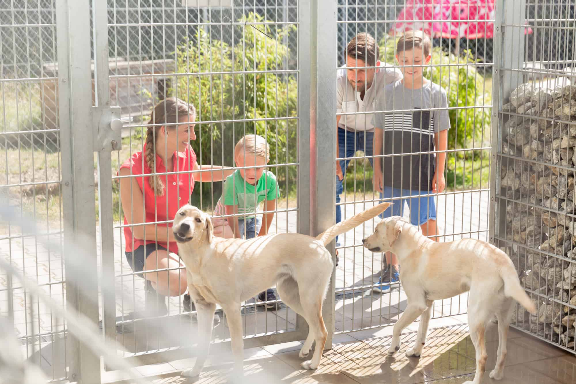 Family at a pet shelter looking for a dog not realizing the fee isn't charitable contribution for tax purposes.