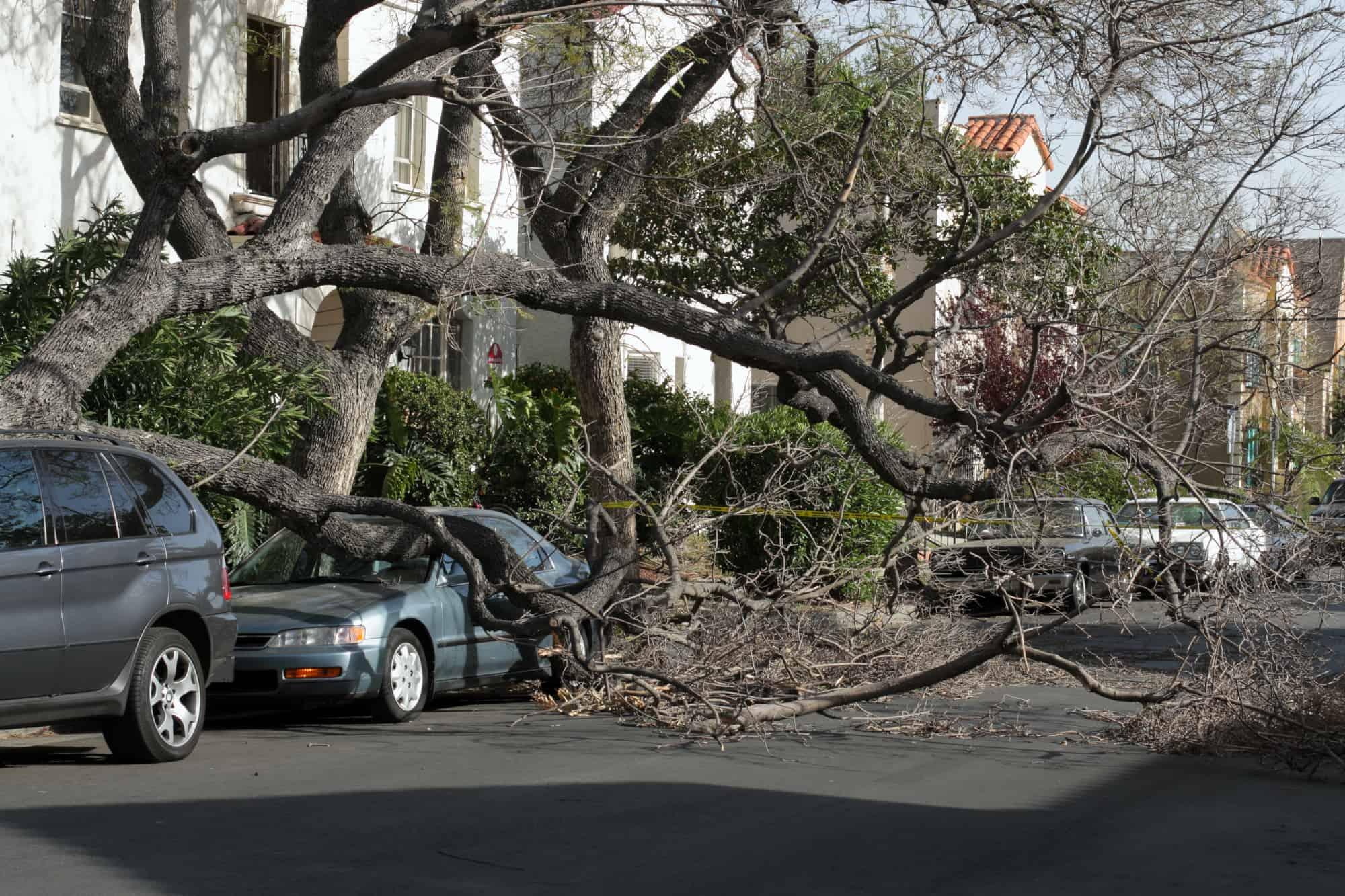 Fallen tree on Honda parked along the sidewalk